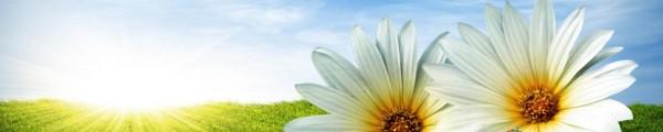 cropped-spring-flowers.jpg
