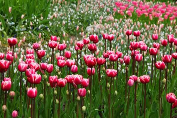 nature flowers bloom blossom